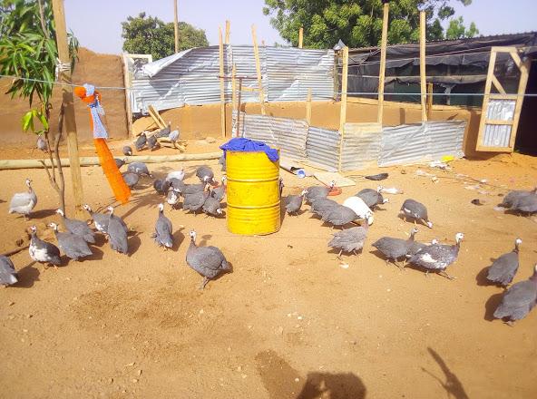 Aboy Poultry Farm