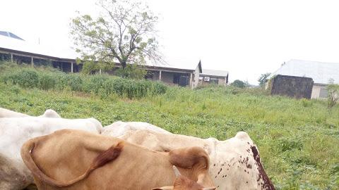 Abdul Best Breeders Livestock Farm