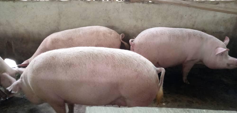 Alata Farms