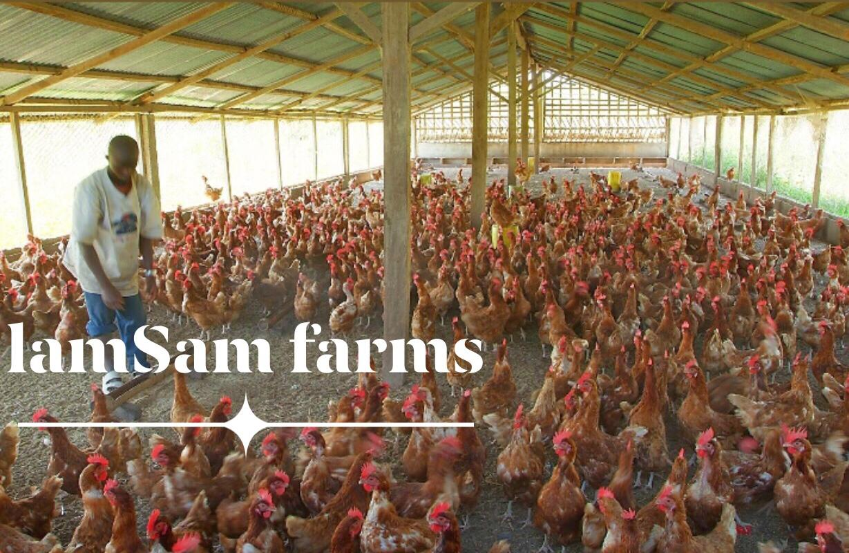 Lamsam Farms